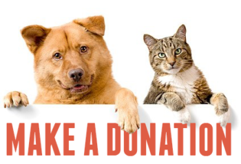 Make a donation to Rescue Express