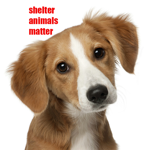 Shelter Animals matter